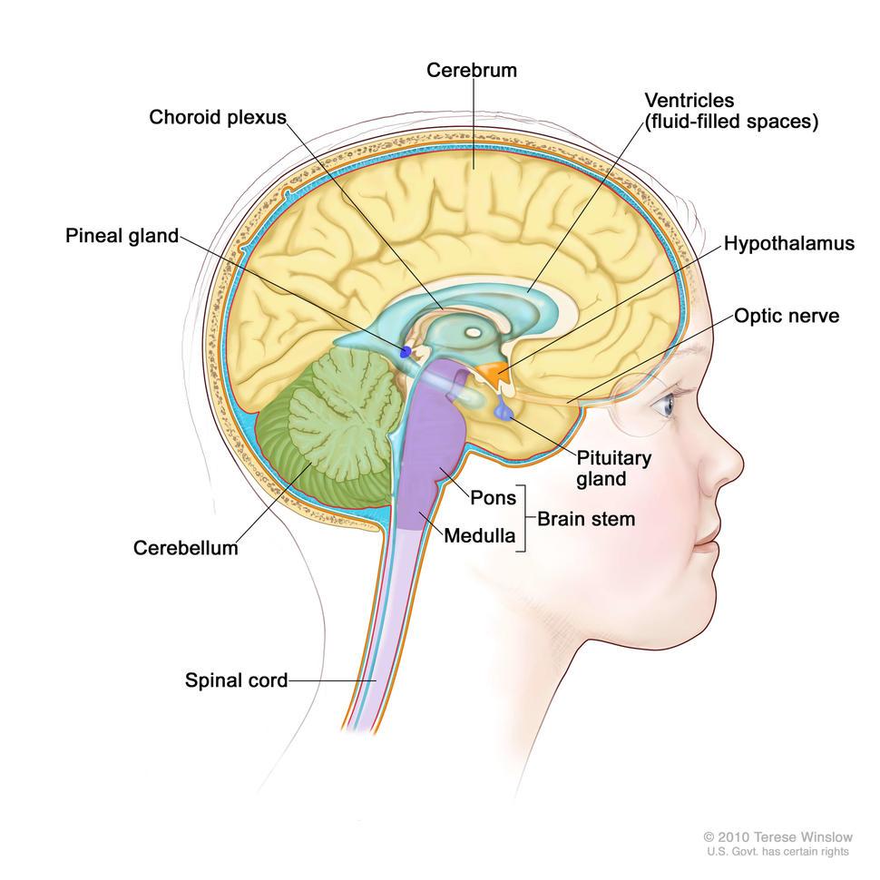 hpv and brain cancer papilloma virus cane contagio uomo