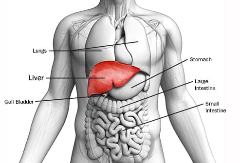 hepatic cancer and pregnancy