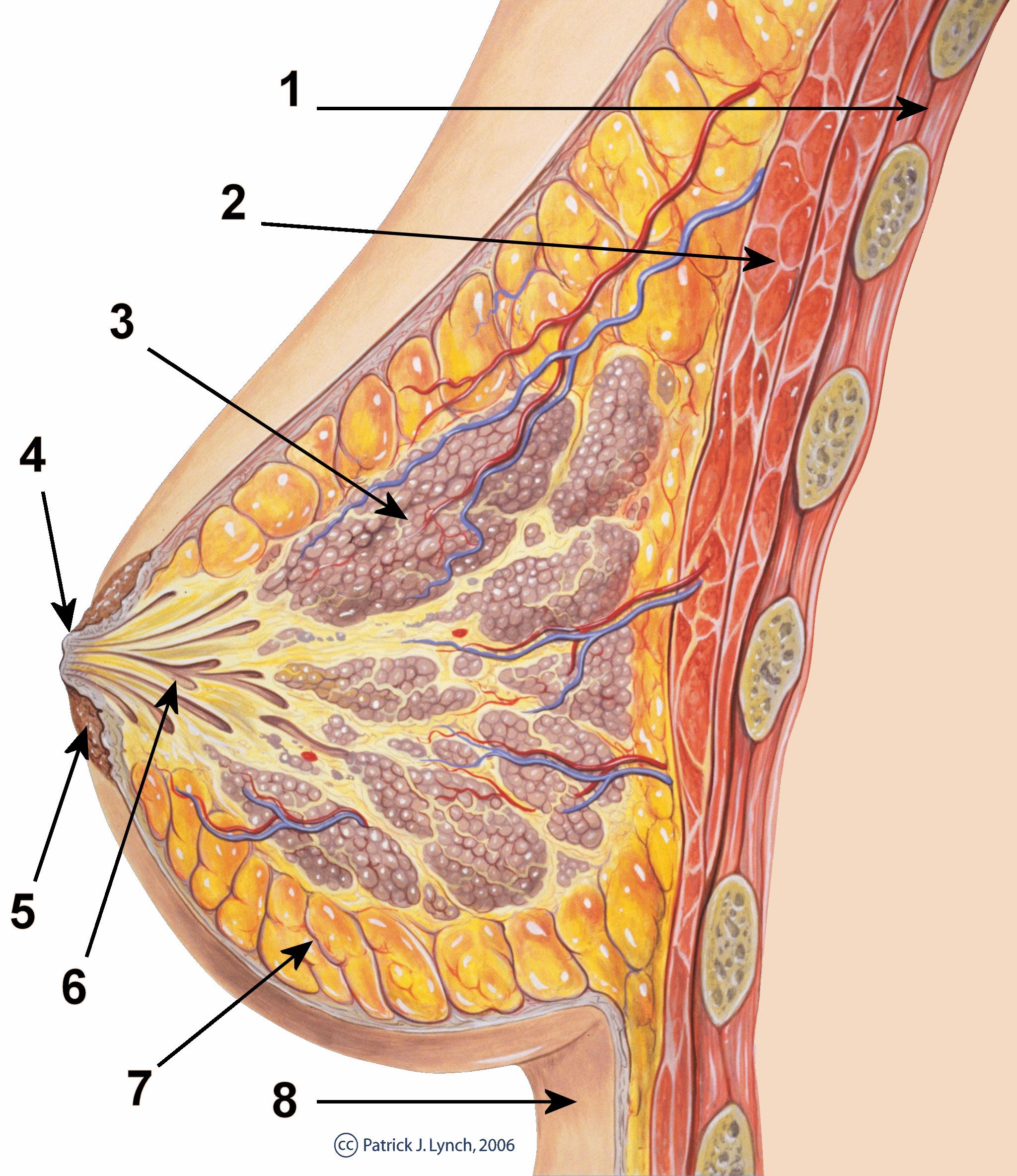 papilloma capezzolo gravidanza