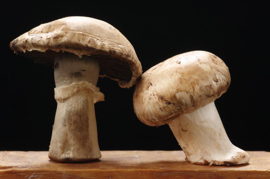 ciuperci valoare nutritiva)