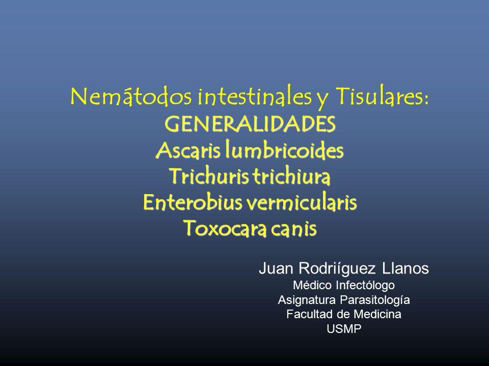 enterobius vermicularis ascaris lumbricoides)