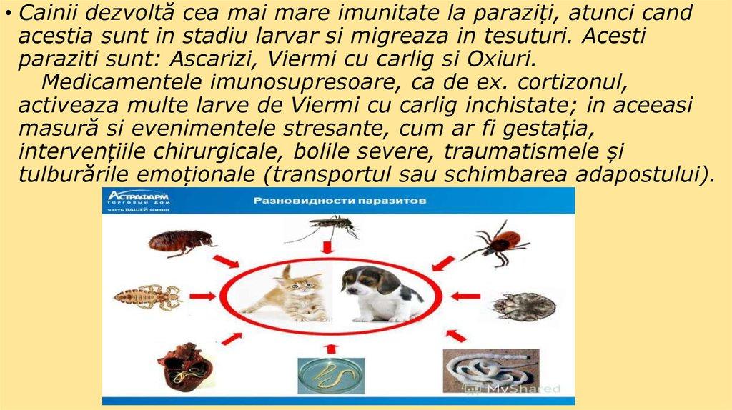 paraziti animale
