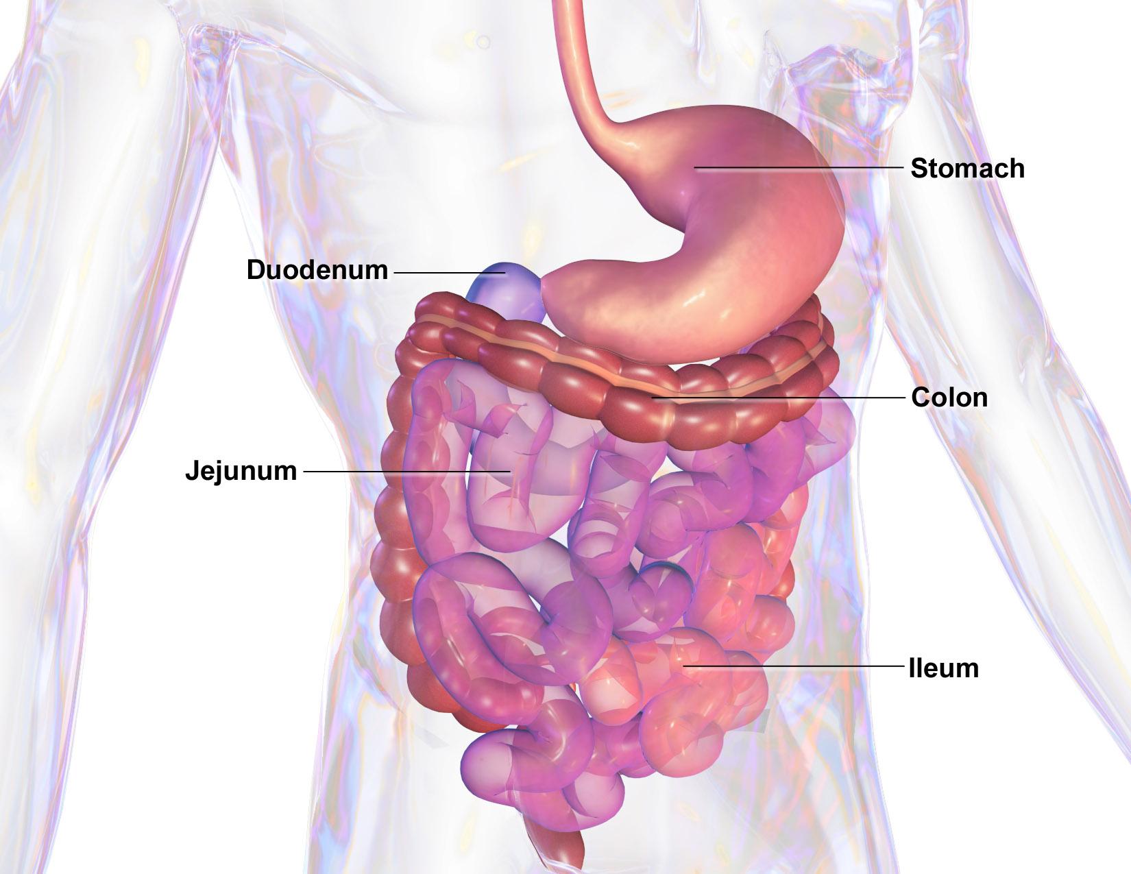 paraziti colon papillomavirus cura farmacologica