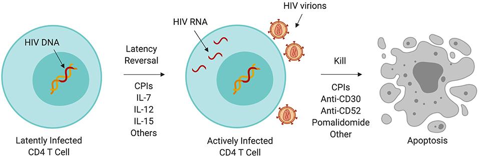 hiv and penile cancer oxiuros no intestino
