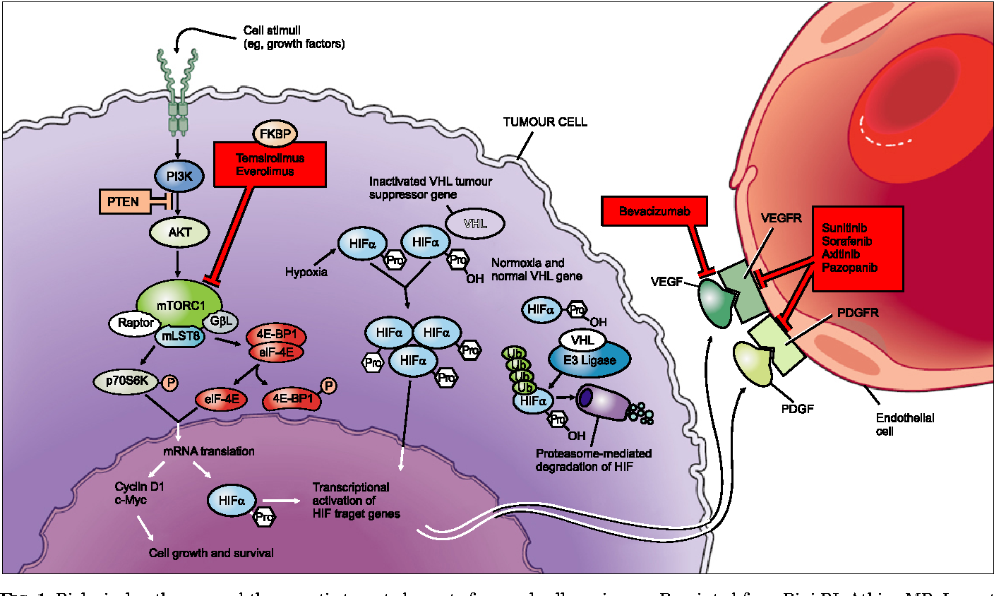 renal cancer targeted therapy)