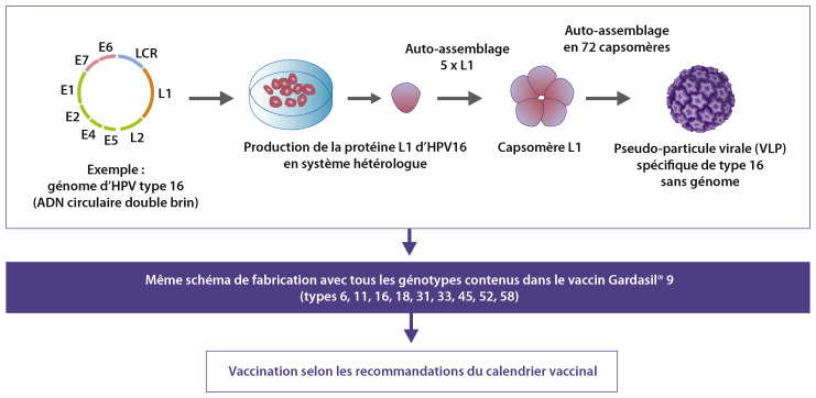 traitement papillomavirus stade 1)