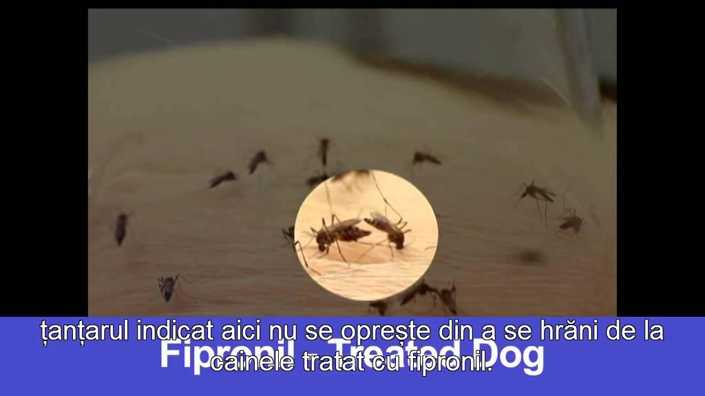 paraziti externi la cai)