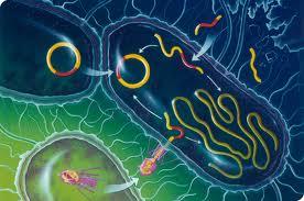 bacterii rele)