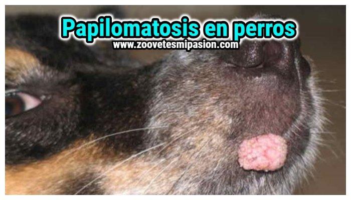 papiloma en la piel de los perros)