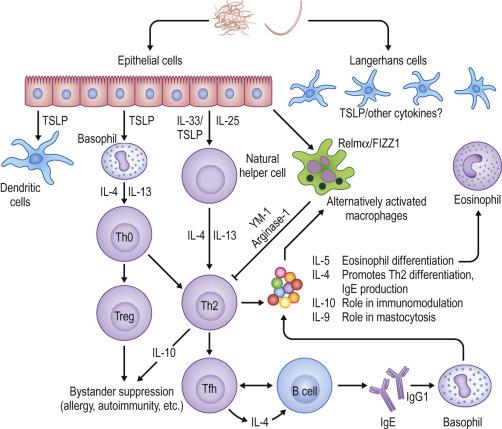 helminth infection eosinophilia natural treatment of human papillomavirus