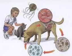viermisori giardia la copii