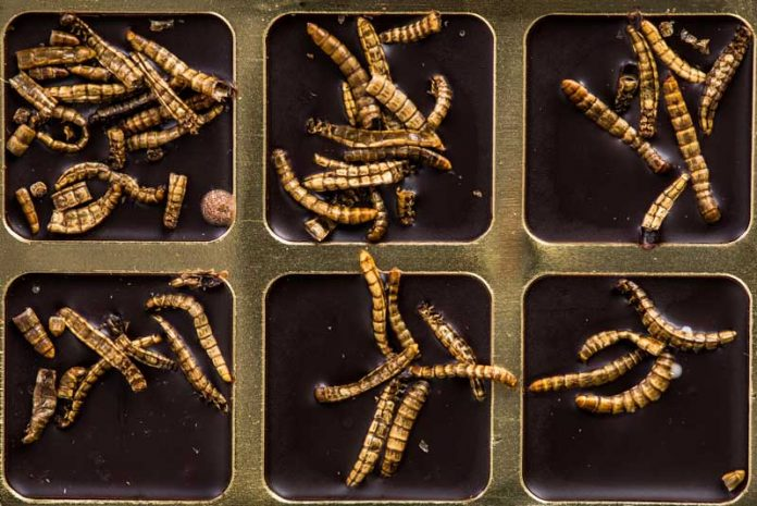 paraziti intestinali om)