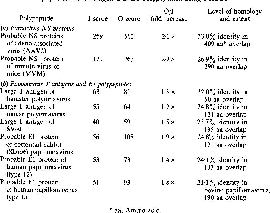 human papillomavirus b19