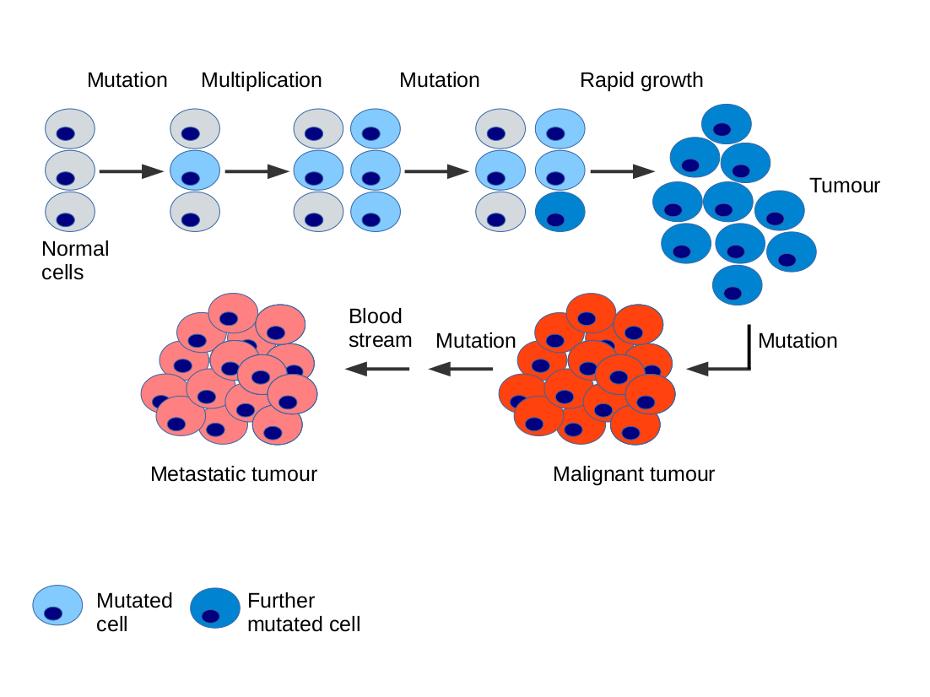 virus papiloma humano donar sangre papiloma en seno
