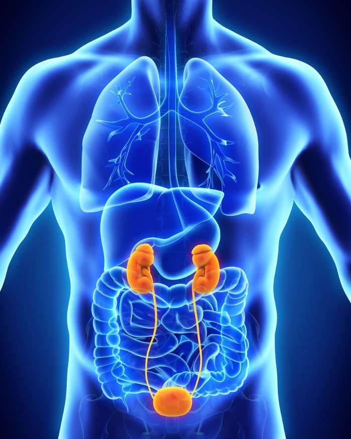 papilloma virus vescica sintomi hpv genital no homem