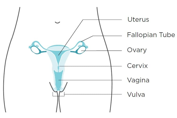 cancer cuello uter parazity v lidskem tele