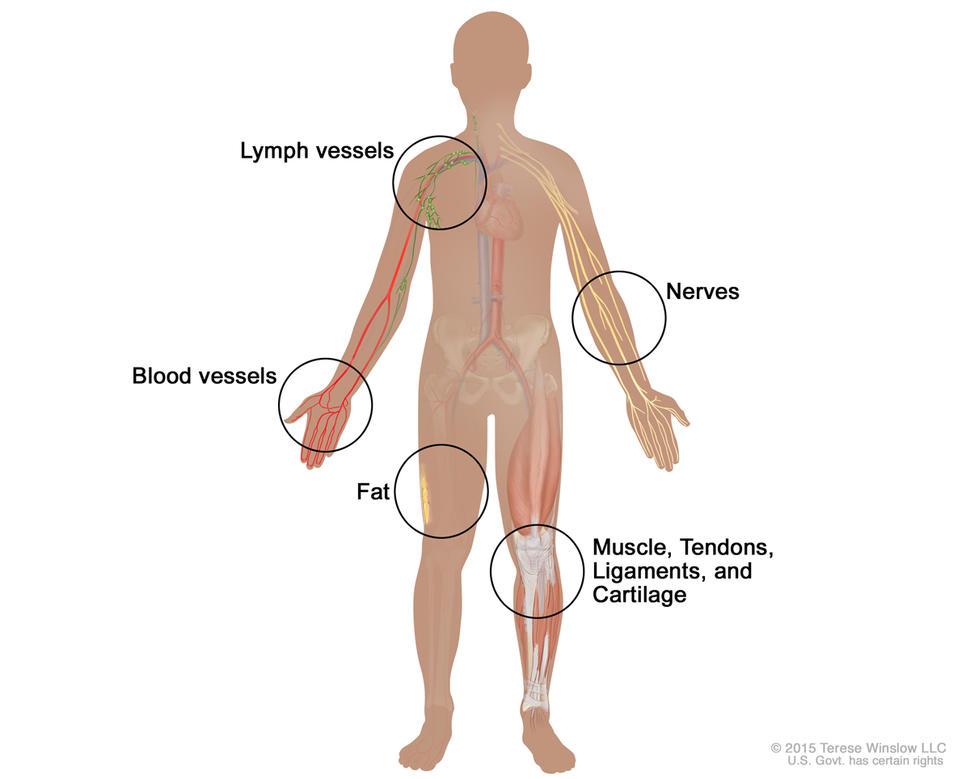 cancerul de sân - Traducere în italiană - exemple în română   Reverso Context