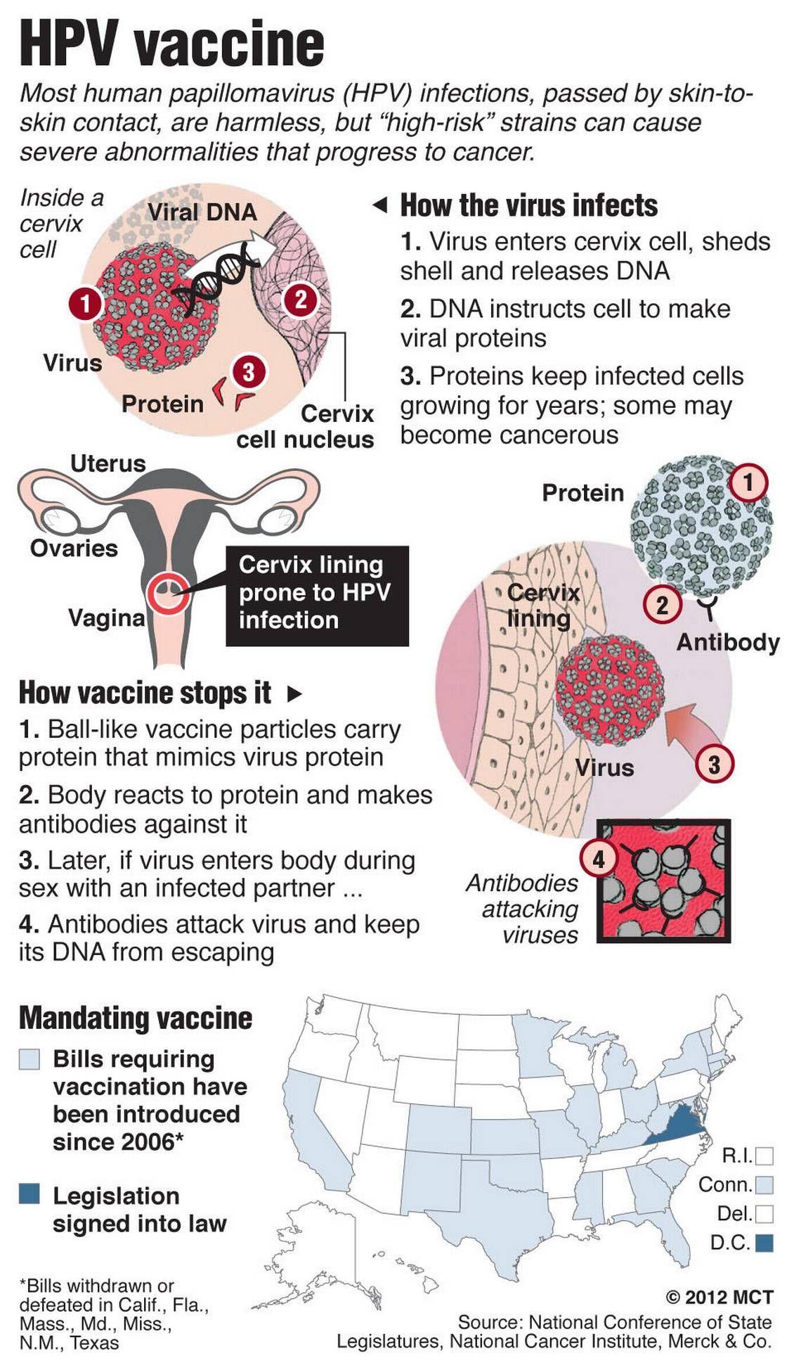 hpv virus and working