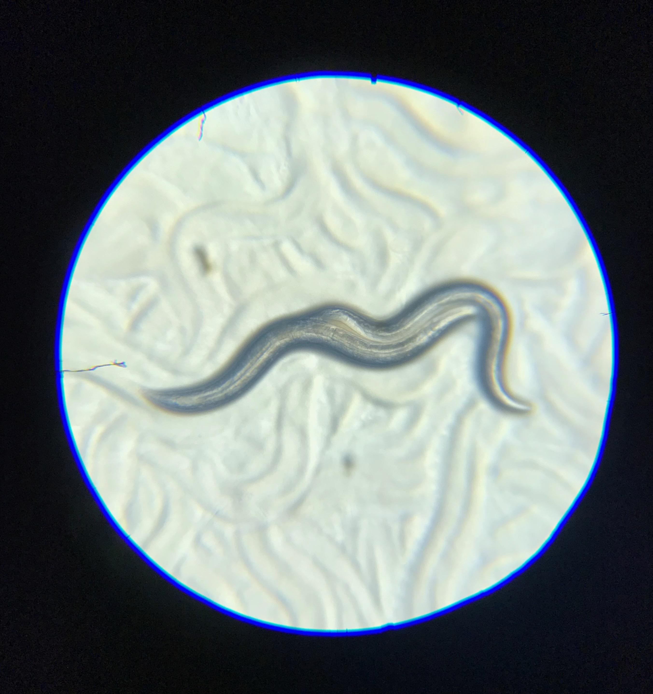 organismele bazate pe sol sunt parazite