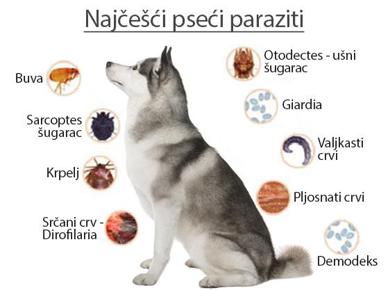 crevni paraziti kod pasa simptomi