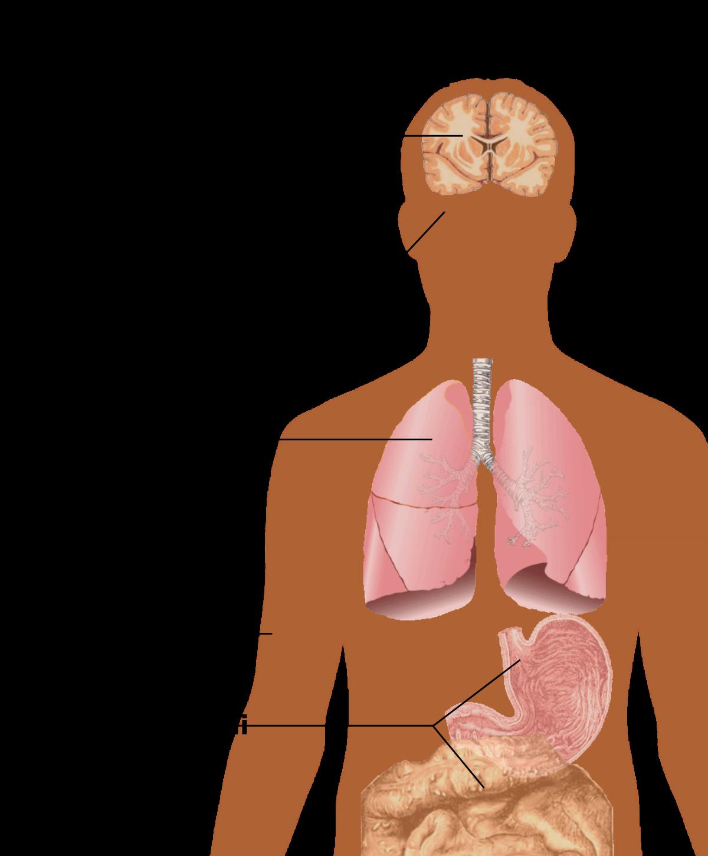papilloma virus segni e sintomi