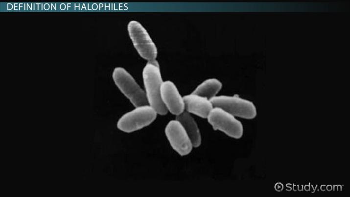 bacterie xerophile definition)