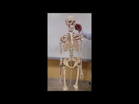 Curs 2 - Patologia Apendicelui Cecal