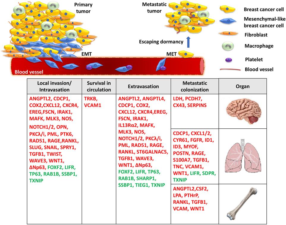 metastatic cancer genetic)