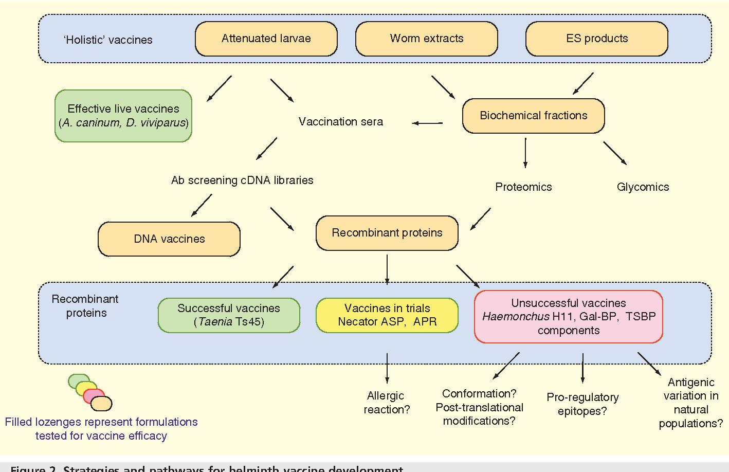schistosomiasis vaccine development)