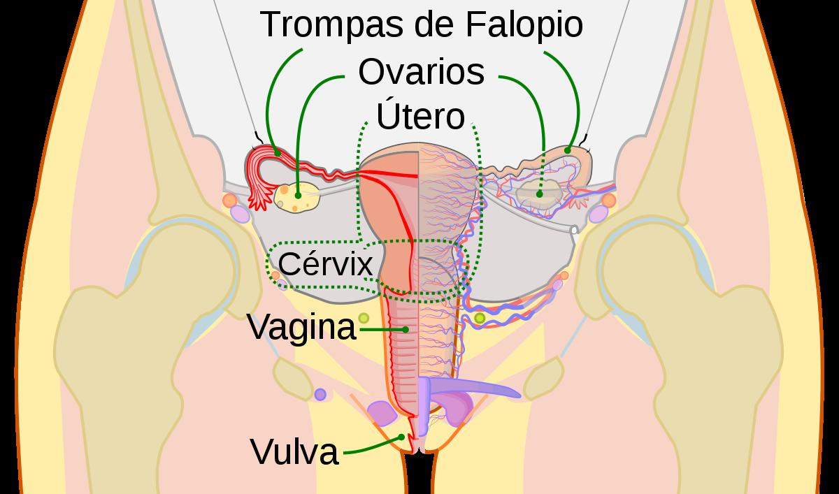 papanicolaou normal colposcopia anormal)