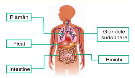 detoxifierea ficatului si rinichilor