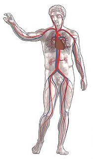 dezintoxicarea sangelui
