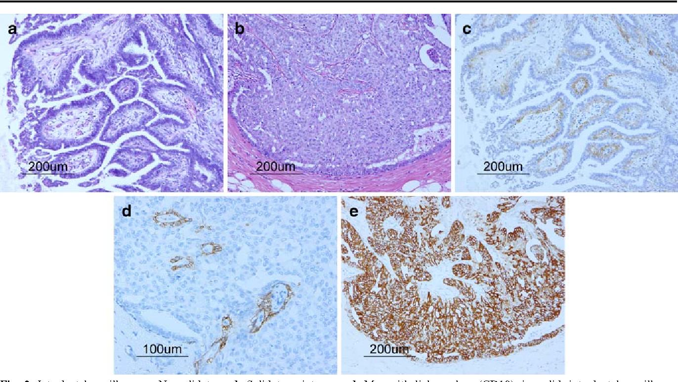 papilloma del gatto helminth host immune system
