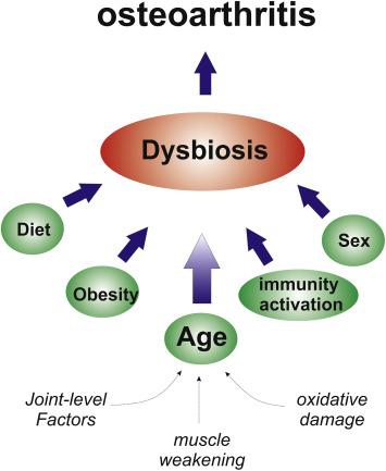 dysbiosis pain)