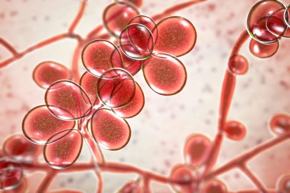 Heilkräuter gegen Warzen und Furunkel   Home remedies for warts, Warts remedy, Get rid of warts