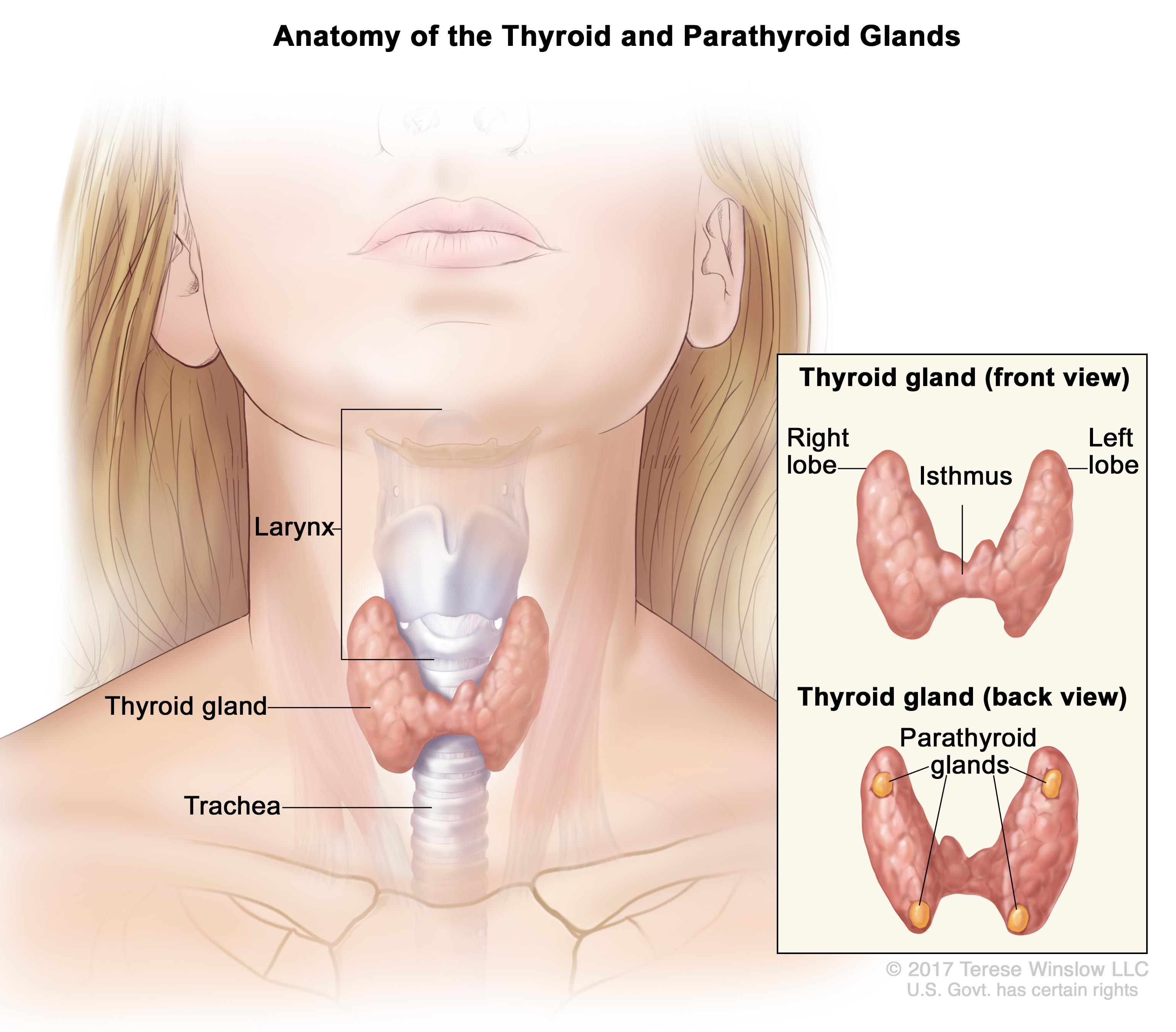 papillary thyroid cancer young