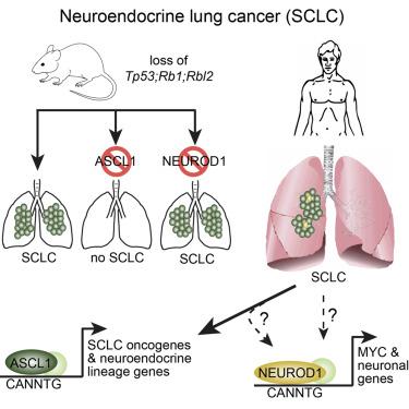 NOU TRATAMENT PENTRU CANCERUL NEUROENDOCRIN