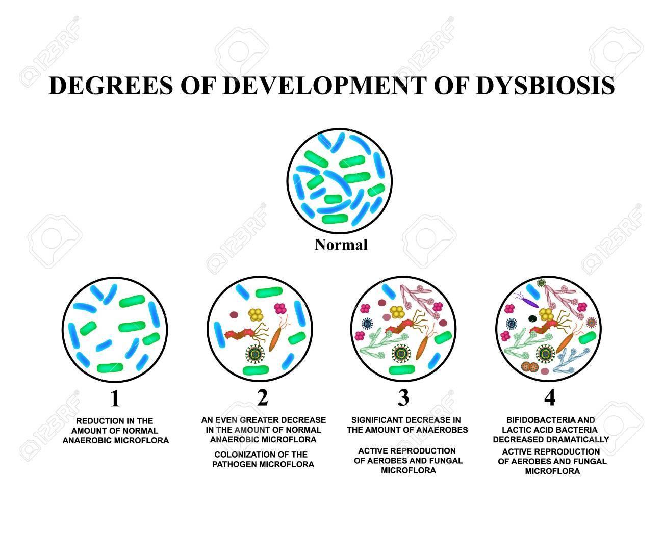 dysbiosis large intestine