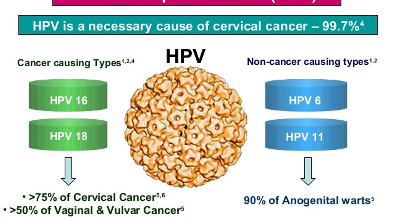 how do you get human papillomavirus cancer)