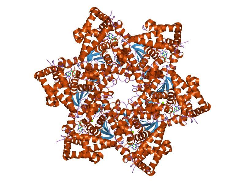 k significa virus del papiloma humano