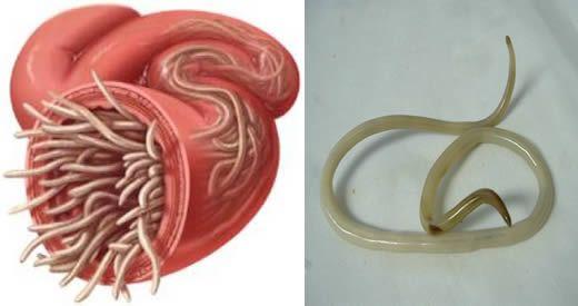 ossiuri adulti rimedi naturali genital hpv infection symptoms in females