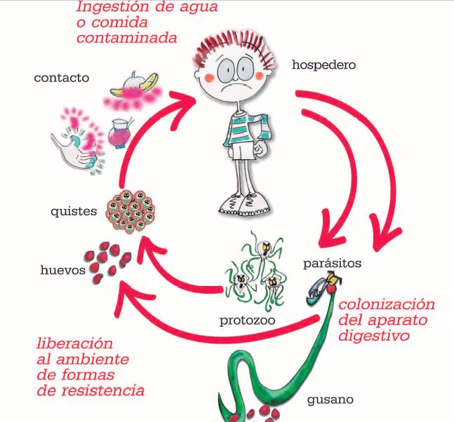 oxiuros intestino