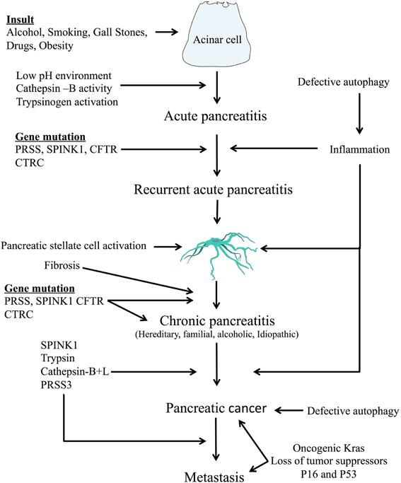 pancreatic cancer etiology