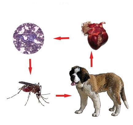 paraziti de sange