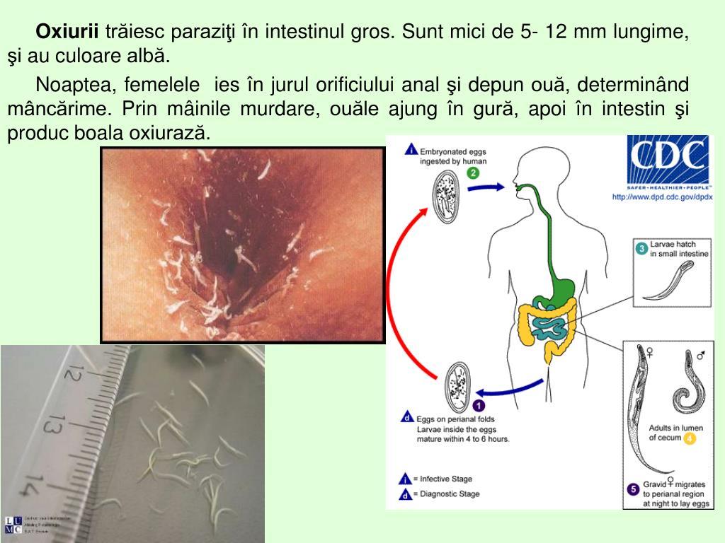 paraziti in gura