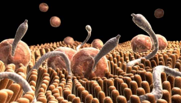 Paraziti in sange