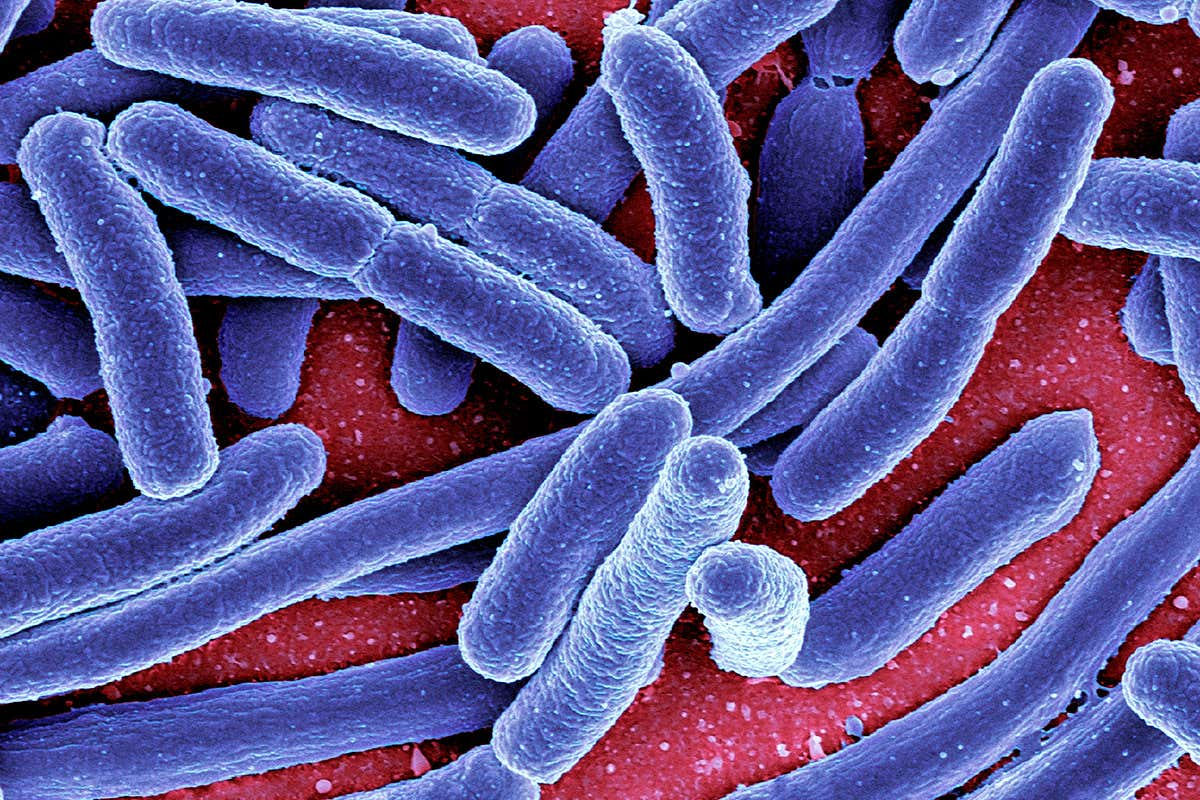 toxine intestin