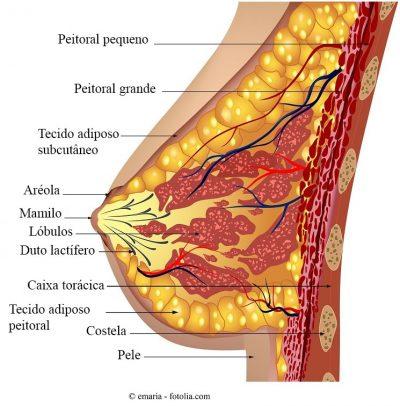 tumor papilloma de mama)