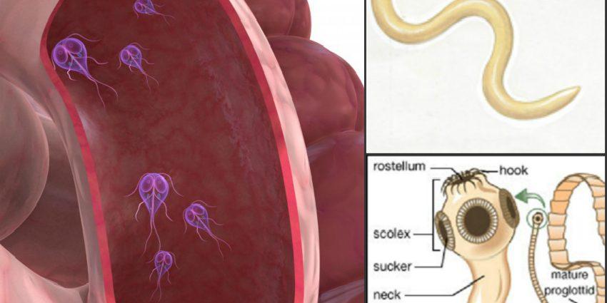 Tipuri de viermi Giardia