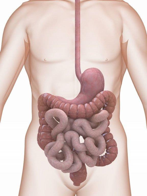 Analiza o Giardia in črvi